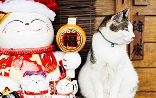"""台湾猴硐却是""""猫村"""" 还是全球最佳赏猫地"""