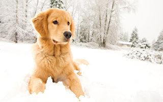 大冬天竟把寵物關在戶外 現條例或被修改