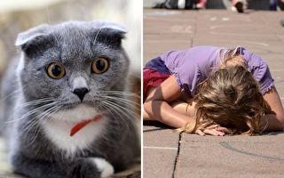 每次少女伤心哭倒在地 贴心猫咪都会对她做这件事