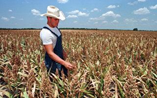 川普:与巴西和南美的协议将帮助美国农民