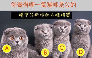 哪只猫咪是公的?测测你的人格特质