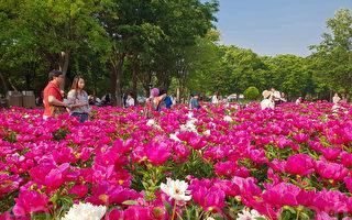 组图:首尔大公园玫瑰花节 初夏踏青赏花趣