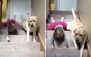 比賽趴著下樓梯 暖心大狗狗讓小女孩贏