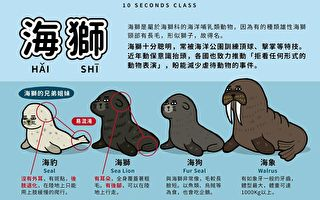 海獅海狗傻傻分不清?這張圖10秒分辨讓人嘖嘖稱奇