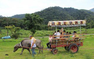 宜兰童玩节文化体验营招生  耕牛 坐牛车 抢先玩