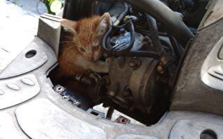 无家可归小猫 躲进车喵喵叫 台湾人超有爱 自掏腰包救猫