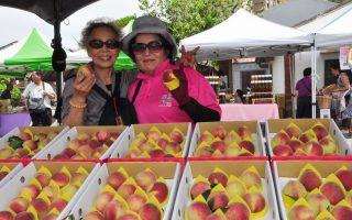 五峰乡5月桃尝鲜 好吃好玩促销活动在新瓦屋