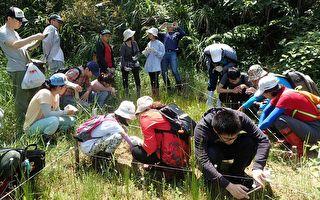 抢救新竹濒危食虫植物21年  关键一役在今日