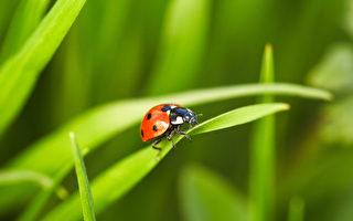 异相? 数百万只瓢虫聚集在澳洲无线电塔