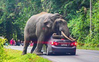 大象發脾氣把汽車給毀了 第3招相當驚人!