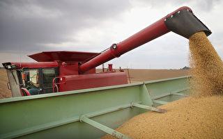 美中谈判达共识 川普:农民迎来最好的事