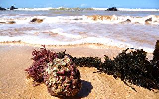 【海藻鈣推薦】Live2Move有機海藻鈣有效改善骨質疏松症