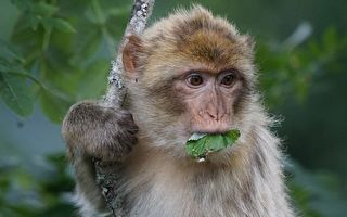 猴子喝水不是去水潭邊!「一秒開瓶」你見過嗎?