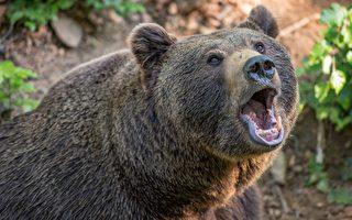 俄罗斯最惊奇的日常 就是大熊和我一起前进