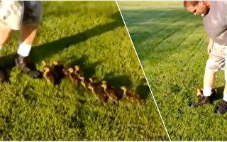 """小鸭子把男子当作""""妈妈""""跟前跟后 原因:很有爱!"""
