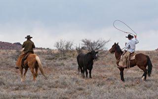 发怒公牛冲向人群 牛仔用一根绳子化险为夷