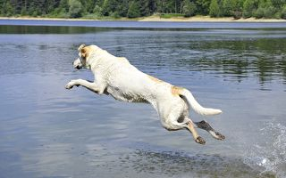 主人去釣魚 狗狗下河叼回的東西讓他大喜