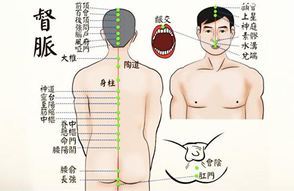 任督二脉之督脉:从长强穴到龈交穴。(谈古论今话中医提供)