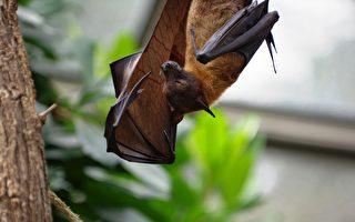 墨市男欲救蝙蝠险患致命病毒