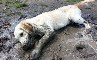 当汪星人遇到泥巴坑 奋不顾身秒变泥雕狗