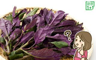 是致癌毒菜?還是補血聖品?揭紅鳳菜真面目