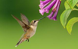 """男子秀创意 各种""""花朵""""装置近距离喂蜂鸟"""