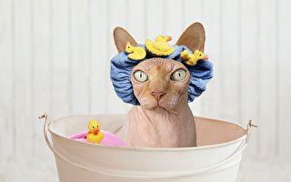 是誰沒事搞這些東西呀?小貓準備洗澡大驚嚇