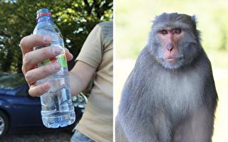 口渴了怎麼辦?猴子哥一秒開保特瓶喝飽飽