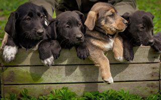 好心人搶救9隻小狗狗 完成不可能任務 網友看得瞠目結舌