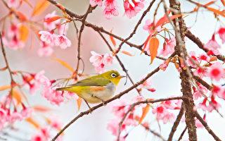週末好去處(5月25日~5月27日)春季觀鳥等