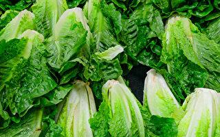 6名加拿大人食用染菌生菜生病