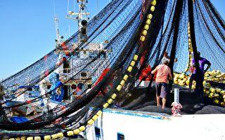 沉重漁網掉出不速之客 躺魚堆不走引漁民大笑