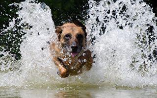 看過貨真價實的「狗爬式」嗎?一群狗狗在水池大秀泳技