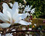 詩詞:花花世界