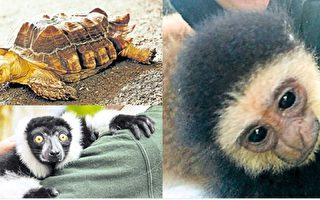 安省动物园3动物遭窃 员工哭求归还