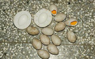 细节就在蛋蛋里!假蛋工厂专业出品 让亲鸟们真假难辨