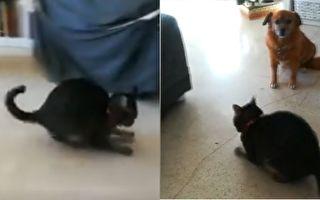 你看过猫咪这样玩球的吗?狗狗也傻眼