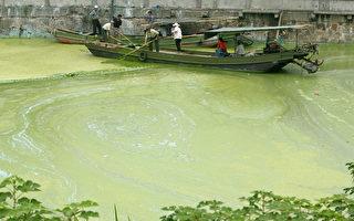 千億元砸太湖 黃色藍藻依然氾濫的背後