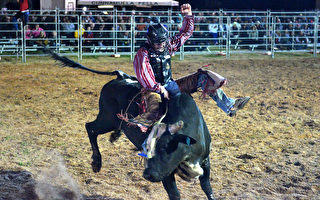 职业骑牛环球杯赛周末将首次在悉尼举行