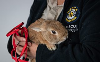 無主提包引阿市機場炸彈恐慌 原來是只兔子