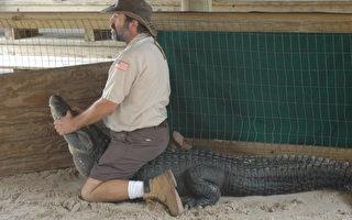 鱷魚再次奪命 佛州居民如何應對?