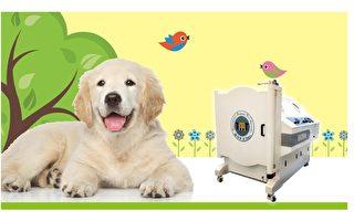 神奇寵物高壓氧 「無痛療法」犬貓奇蹟似康復