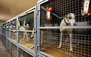 逾五百流浪寵物湧入 動物收容所爆滿