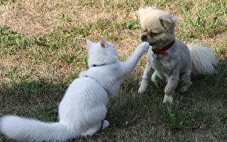 再练100年吧!白猫快拳vs.黑狗力颚 结局哭哭