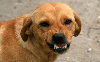 这只狗狗太会演 乖狗狗变身狠角色