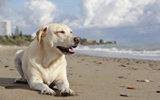 墨爾本狗狗在「託兒所」待遇如何