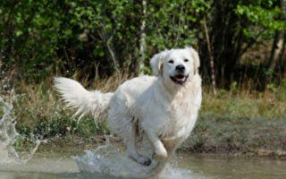 消暑片!除了飛盤丟球 看看狗狗怎麼跟水柱玩耍