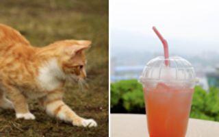 為什麼喝不到?小貓咪能成功用吸管喝水嗎?