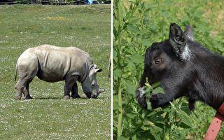 满分友情万岁!小羊和小犀牛的跨界情谊