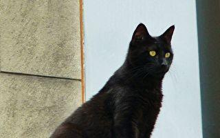 """黑猫走在""""高低步道""""发现录影时尴尬定格"""